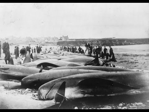 Remains of 144-year-old whaling shipwreck found near Alaska