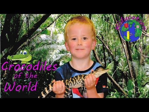 Awesome Facts - Crocodiles, Alligators and more!   Educational Videos for Kids