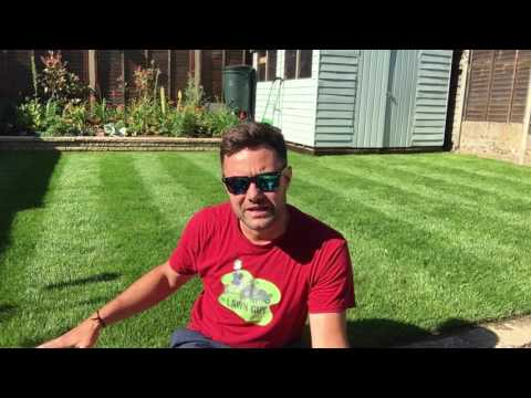 How to water and care for your lawn in a heatwave