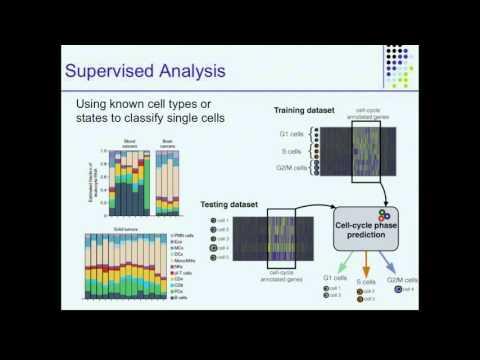 Algorithms for Single Cell RNAseq Analysis