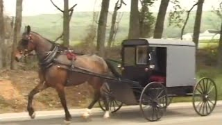 Our Gazebo Dvd (full-length) | Amish Country Gazebos