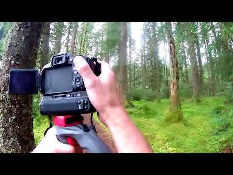 Argyll forest Aug 2017