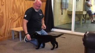 Early Puppy Training