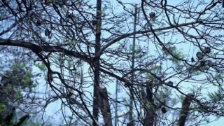 فيديو كليب دنيا بطمة ~مزيان واعر ~