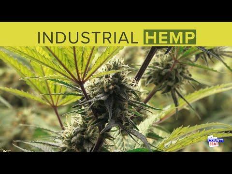 Industrial Hemp in Utah as a high value crop for CBD oil.