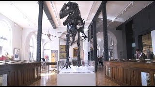 Make it a #FossilFriday with a visit to Lapworth Museum of Geology