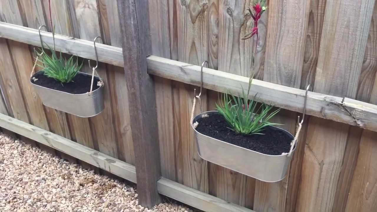 Kangaroo Paw in Pots to break up that long fence. Fence ...