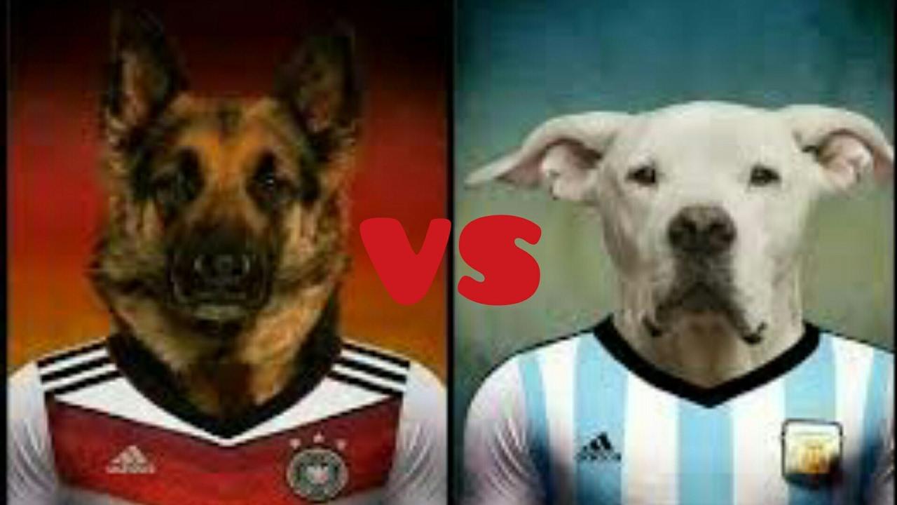 Dogo Argentino Vs Pastor Aleman Cual Gana Peleas De Perros Youtube
