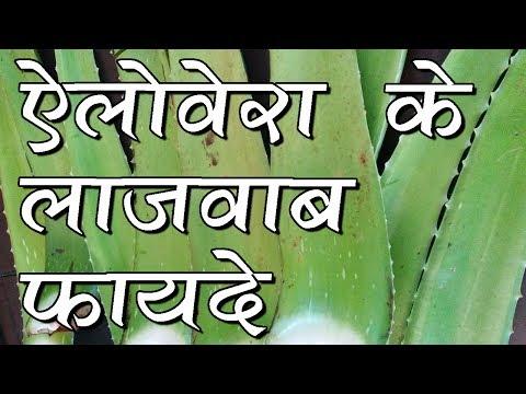 Alovera Benefit -future of food- meditional plant-hindi