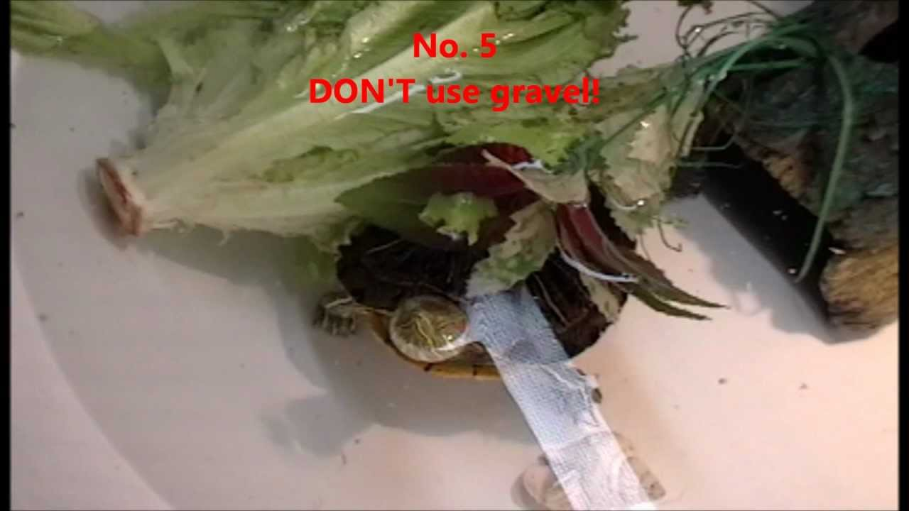 ... 10 DONTS in caring for a Red Eared Slider Turtle. Part 1 - YouTube