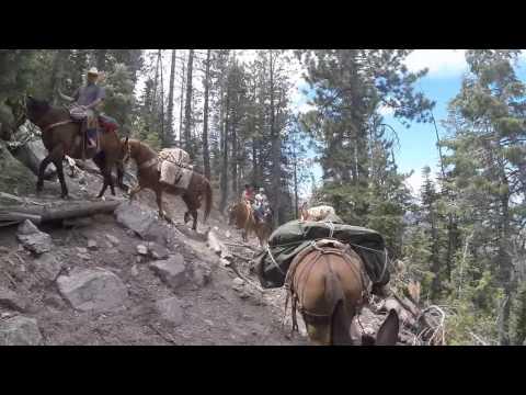 Mule Trainer Hero: Packer Edition