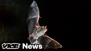 Here's How Scientists Think Coronavirus Spreads from Bats to Humans