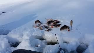 КЛЁВ ОКУНЯ Трудовая рыбалка на окуня на маленьком омуте или разведка новых уловистых мест