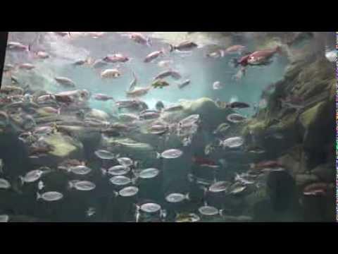 Рыбы Средиземного моря. Крит.