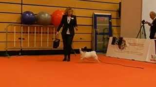 スイスのWinterthurで行われた犬のメッセHUND2014 Triple-S: Hundeerzie...