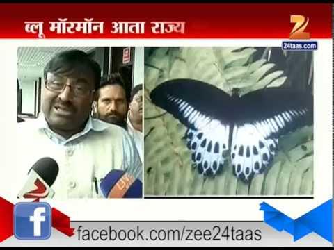 Mumbai : Sudhir Mungantiwar Announced Blue Mormon As State Butterfly