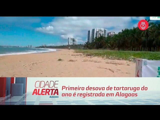 Primeira desova de tartaruga do ano é registrada em Alagoas