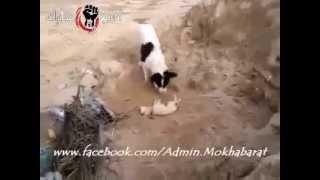 درس أخر من الحيوان إلى بني آدم { كلب يدفن جرو ميت وجده في الطريق } - ( سبحان ربي العظيم ♥)