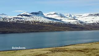 Reydarfjordur, East Iceland in may, the summer is coming :)