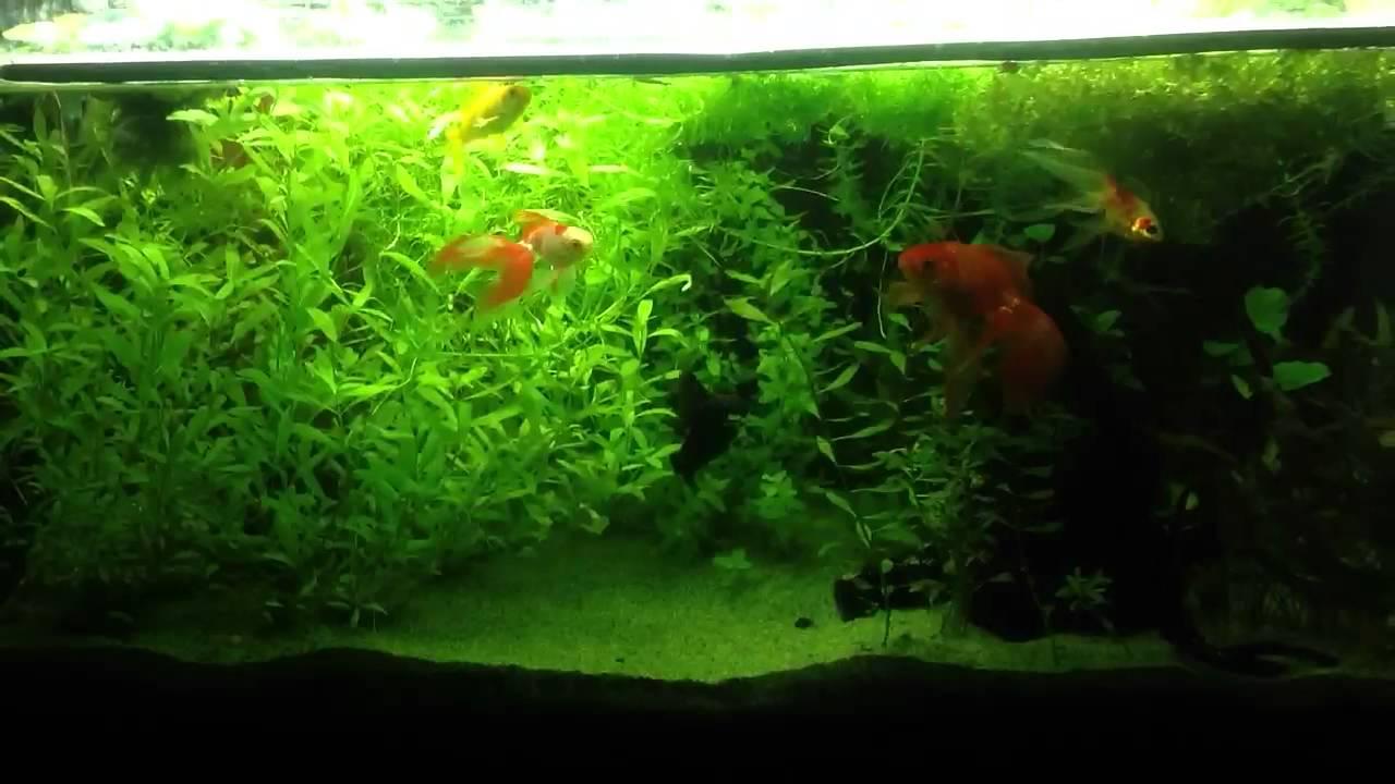 Vasca dei pesci rossi youtube for Filtro vasca pesci rossi