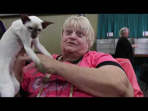2017 East of Eden Cat Fanciers Show
