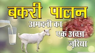 Goat Farming- A profitable business in India |  बकरी पालन  | Goat Farming Business