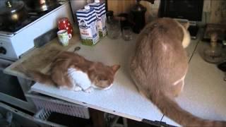 Коты и валерьянка! Первыми на кухню приходят коты и кошки.