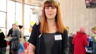 Рекламка выставки кошек 1-2 ноября 2014 г. Брест