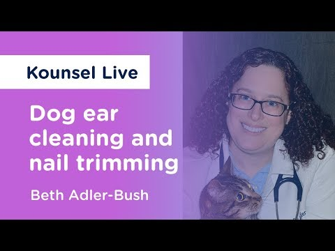 Dog ear cleaning and nail trimming  - Kounsel