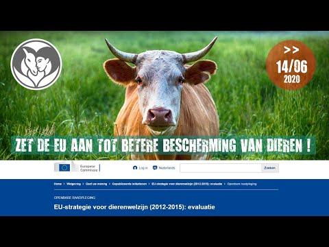Vraag aan de EU meer inzet voor dieren!