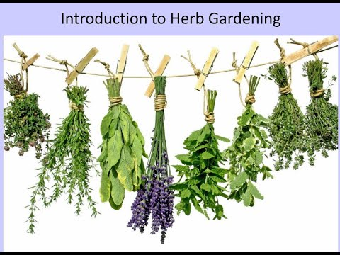 Introduction to Herb Gardening