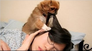 Cute dogs waking up owners   Funny dog compilation