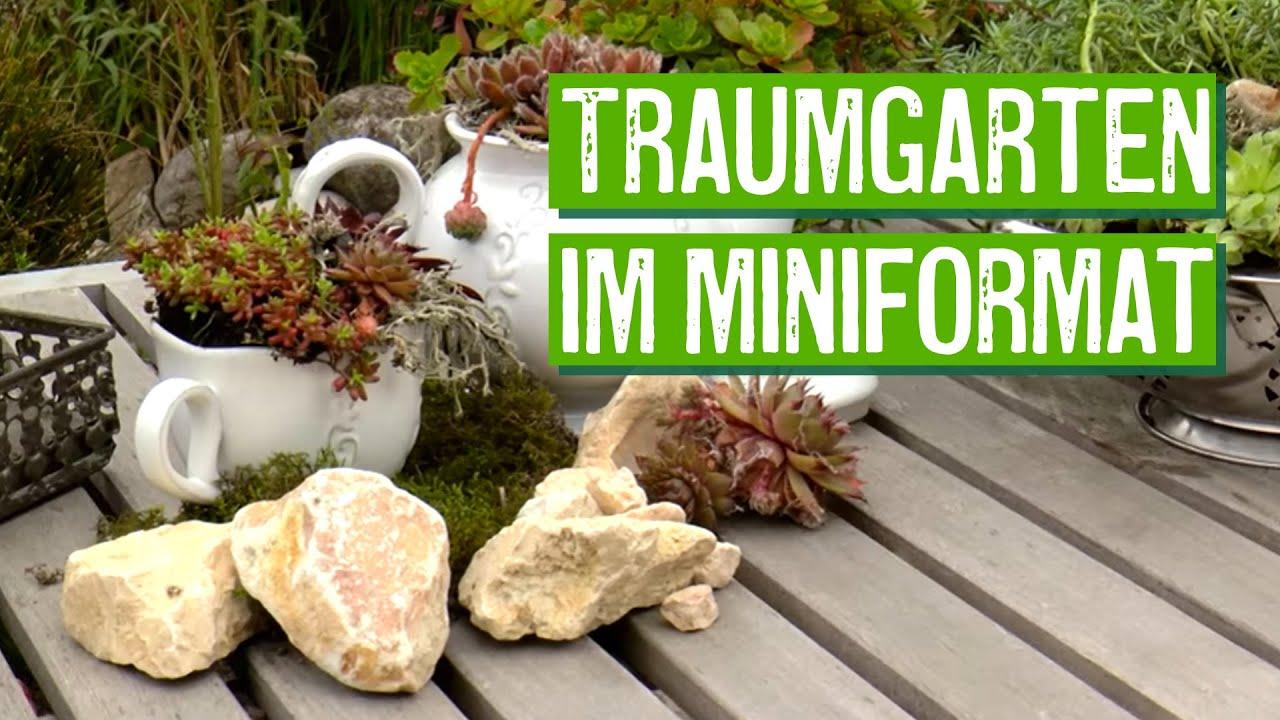 Florarium: Mini-terrarium Selber Machen Mit Moos, Kakteen Und ... Mini Garten Aus Sukkulenten Selber Machen