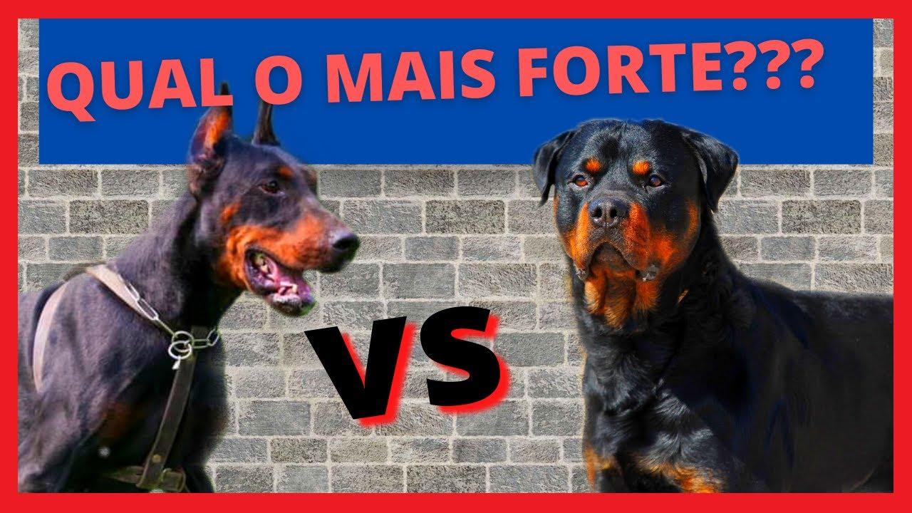 DOBERMAN VS ROTTWEILER  QUAL O MAIS FORTE??