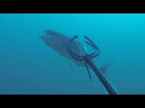 Free Dive Killer Shoots Deadly Head Shots!