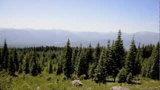 Oregon Conifers