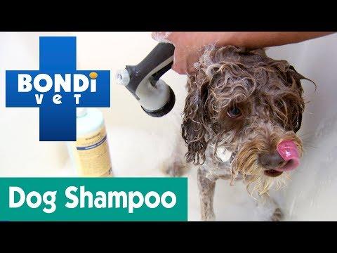 Do I Need To Only Use Dog Shampoo? | Ask Bondi Vet