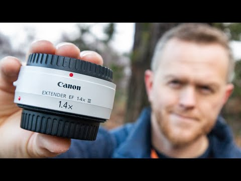 Canon EF 1.4x III Extender Review | Using Canon 7D II & Canon 100-400mm f/4.5-5.6 II