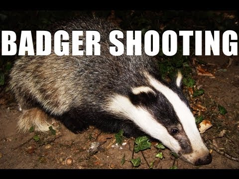 Fieldsports Britain - Shooting badgers and wheelchair guns   (episode 150)