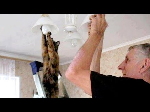 WATCH THIS and I PROMISE YOU WILL LAUGH ALL DAY - Funniest ANIMAL compilation