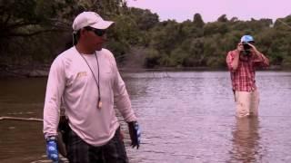Season 2 Episode 11 | Arapaima in Guyana |  211