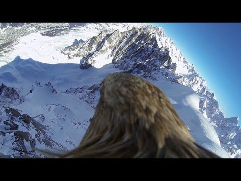 Flying eagle point of view #3