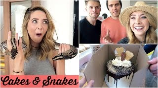 CAKES AND SNAKES
