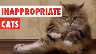 Inappropriate Cats | Funny Cat Video Compilation 2017
