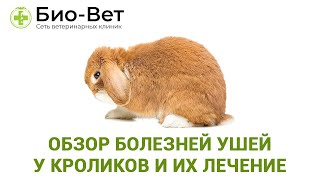 Обзор болезней ушей у кроликов и их лечение. Ветеринарная клиника Био-Вет.