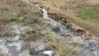 """Видео """"Корабелов.Инфо"""". Поток канализационных стоков образует зловонное озеро"""