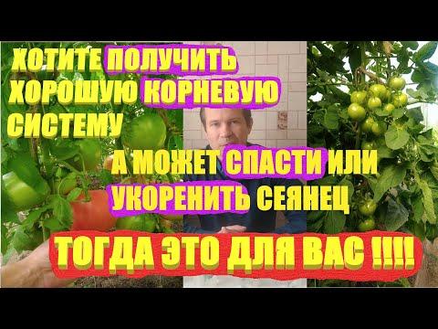 Рассада томатов.СПАСАЕМ РАССАДУ томатов от гибели ЭПИН, ГУМАТ,ЯНТАРНАЯ КИСЛОТА/ЛУЧШИЕ МЕТОДЫ!!!