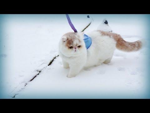 Kitty in Winter Wonderland