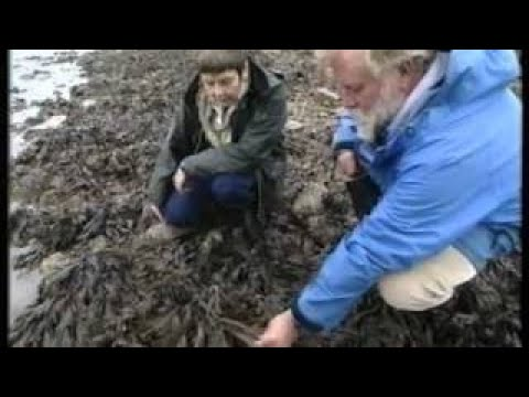 Shore ecology - The Best Documentary Ever