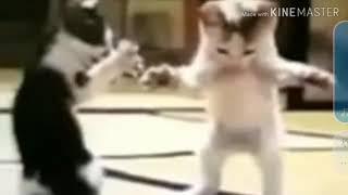قطة تغني وترقص جوني جوني يس بابا